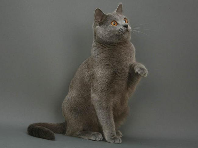 chat male adulte et chaton lier